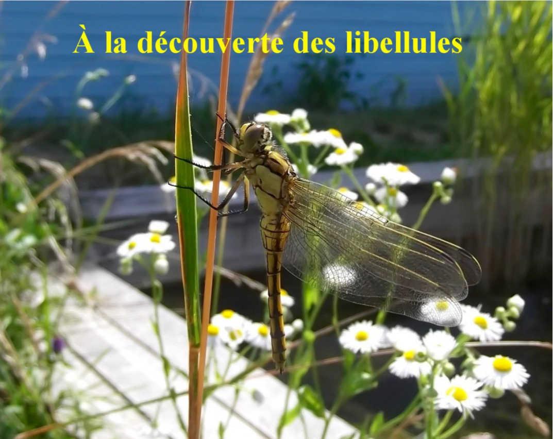 Les libellules au moulin de Bonnes @ Bonnes | Nouvelle-Aquitaine | France