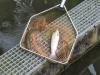 Voici ce qu'on trouve à la pisciculture de Beauronne